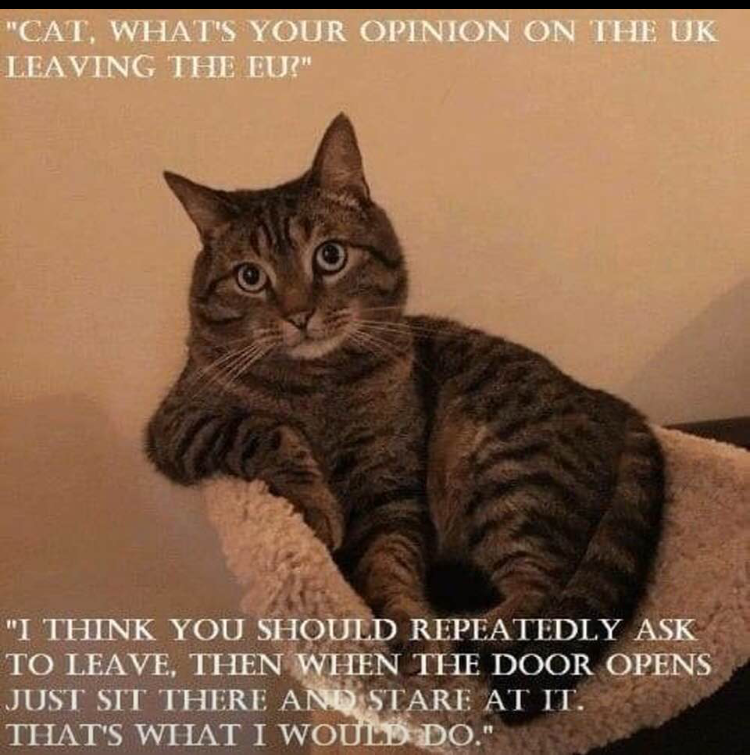 A cat's take on Brexit